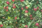 Pflanzen & Obstbäume